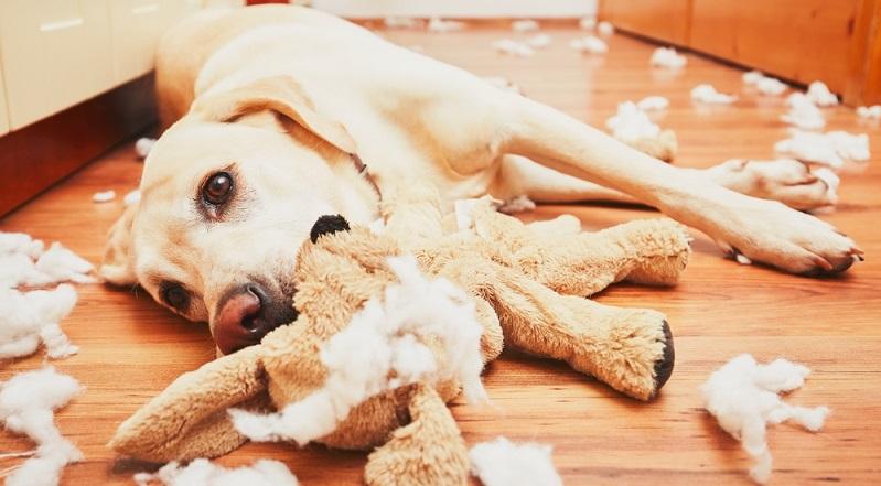 Hund Langeweile - Corona