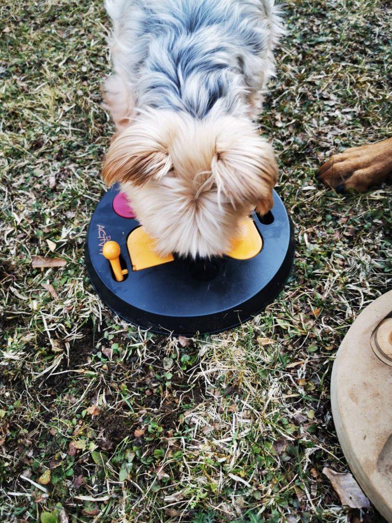 Intelligenzspielzeug Hund, Spaß auch während der Corona Krise