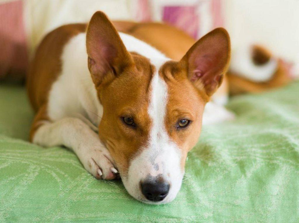 Coronavirus - Quarantäne - Was Hundebesitzer jetzt wissen sollten.