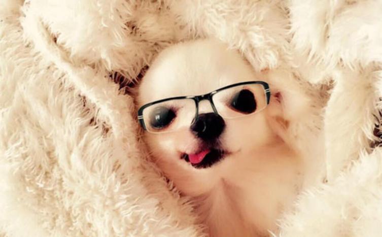 Gemeinsam gegen Corona - der Intelligenztest für deinen Hund